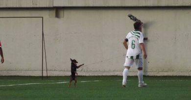 Куче на терена в Лесичово
